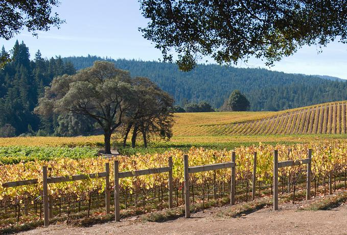 Goldeneye Winery in Mendocino